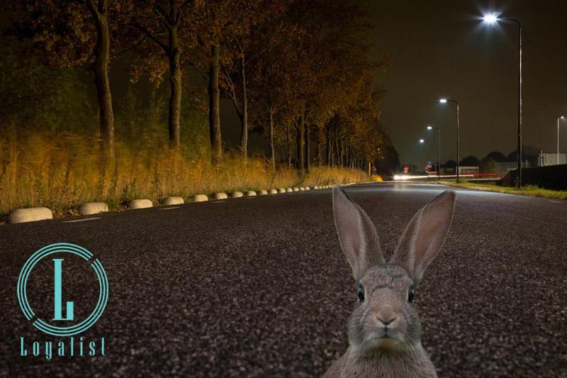 als een konijn in het donker