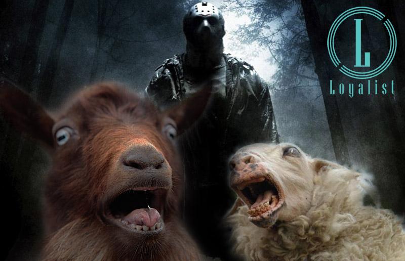 rituele slachting en dierenleed